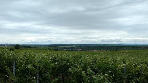 Blick auf Schwabsburg in den Weinbergen