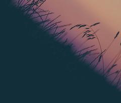 Darkened Peach (lifeless567) Tags: silhouette nature landscape dark crops field farm farming canon eos 70d black diagonal slanted warm summer hot united kingdom england cambridgeshire saw try square blur beautiful calm sun sunset outdoor travel