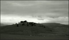 Romanian Carpathians (Yuriy Sanin) Tags: romanian carpathians 4x5 tachihara largeformat landscape horses  hills     yuriy sanin blackandwhite bw   2015