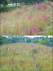 Kettle Moraine Hill Prairie (Laurette Victoria) Tags: dryprairie hillprairie kettlemorainestateforest walworthcounty wisconsin smoothsumac autumn