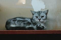 #vsco #vscocam #xiamen #cat  无聊的猫子