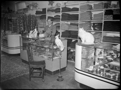 Animals in private zoo [Hood register identifies this as: Ken Read, Whyalla], c.1940s, Sam Hood (State Library of New South Wales collection) Tags: statelibraryofnewsouthwales