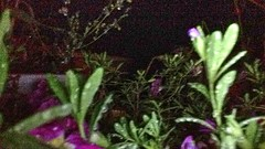 2016-09-27 21.31.45_tonemapped (74prof) Tags: hdr flowers night facetime