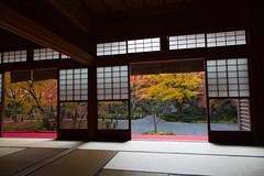Morning Enkoji in Autumn  (Norio.NAKAYAMA) Tags: trip morning japan temple kyoto shrine autumnleaves   japanesefood    yellowleaves    enkoji