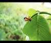 I'll take care of you (satheesh mankulam) Tags: macro nature insects ants canonsx20is