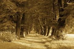a path (Darek Drapala) Tags: park trees light tree nature lumix path poland polska panasonic legnica panasonicg5