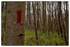 Seneca Red Trail - Germantown, MD (gastwa) Tags: autumn trees sky cloud fall forest woods nikon df ruins voigtlander andrew full frame f2 40mm fullframe fx aspherical ultron slii voigtlanderultron40mmf2sliiaspherical gastwirth andrewgastwirth