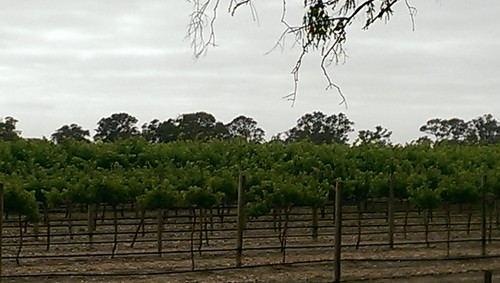 Wrattonbully wine region, South Australia