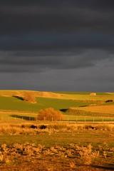 Atardecer y cultivos (Voyaenfocar) Tags: sunset espaa storm canon atardecer spain ngc tormenta castilla vila castillaylen camposdecastilla canon700d vegadeltrabancos