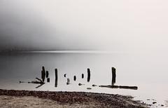 shaded gray (Karin Ziegler) Tags: