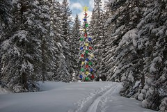 Walking in a Winter Wonderland (dbushue) Tags: trees winter snow nature landscape snowshoe nikon montana walk hike yellowstonenationalpark wyoming wonderland ynp 2014 cookecity silvergate bannocktrail