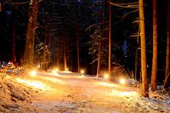Geocaching - Silvesterevent in Schpfen (Thomas Neuhaus) Tags: schnee winter nacht spuren feuer wald silvester stimmung lichter weg waldweg fackeln schpfen