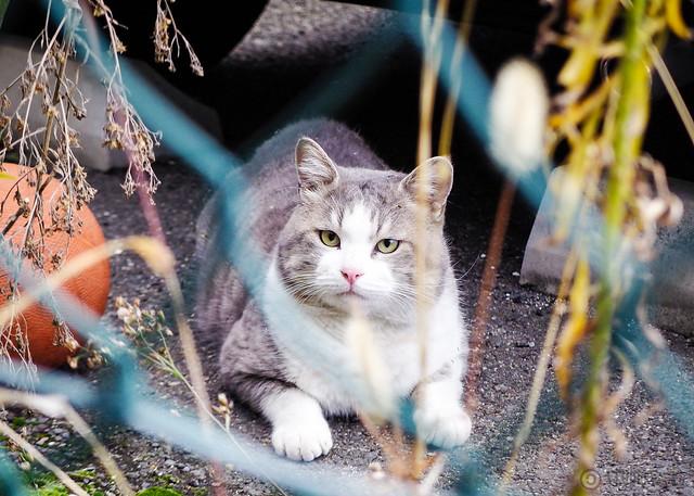 Today's Cat@2014-12-14