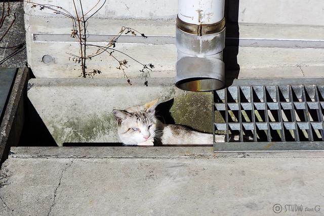Today's Cat@2014-12-18