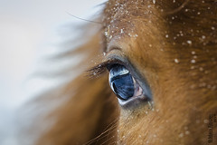 Eye (M. Krupon Photographer) Tags: life camera iris light red summer portrait people horse orange pets sun color macro cute eye nature colors beauty face animal animals vertical horizontal closeup female rural hair mammal outdoors photography gold dawn moving saturated mare power looking bright skin body head farm vibrant background watching scene domestic sphere eyeball anatomy backgrounds chestnut eyelash senses wisdom care staring livestock discovery mammals stable eyelid stallion mane eyesight breeders foal cornea purebred gelding