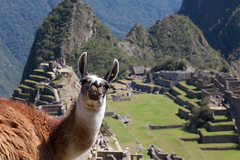 Hola, Greetings from Machu Picchu by geezaweezer, on Flickr