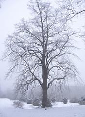 Mist (shumpei_sano_exp3) Tags: naturewatcher multimegashot