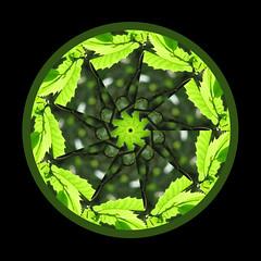 Kaleidoscope 2 (msscoventry) Tags: gimp kaleidoscope mathmap