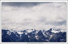 Hurricane Ridge- Olympic National Park, Washington (Mike Keller Photo) Tags: mountains washington nationalparks olympicnationalpark snowcappedmountains