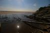 The fallen (A Costigan) Tags: trees ireland sea irish beach water coast seaside wexford curracloe