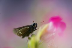 Minolta AF Macro 100mmF2.8 (Atsuro900) Tags: macro nature minolta insects af 100mmf28 instagraming  rawshare