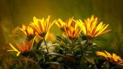 Sun-Catchers (WaSz-Fotograf) Tags: flowers light plant flower color green water yellow garden spring flora natural bokeh 500px ifttt