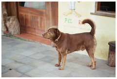Oso (Patrick J. Negwer) Tags: dog naturaleza verde green dogs nature water rio river waterfall ecuador agua perro perros cascadas mindo nambillo