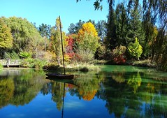 NSW Southern Highlands. Sutton Forest. In Red Cow Farm garden in the autumn. Reflections in the lake with the old boat. (denisbin) Tags: autumn lake garden bee foliage japanesemaple acer refelction mossvale suttonforest redcowfarm zinniaandbee