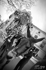 Alcal se va al Roco... (E.M.Lpez) Tags: blancoynegro animal monocromo blackwhite camino desfile mulo roco cofrade virado romera procesin carreta 2016 romeros peregrinos peregrinacin cofrada hermandad peregrinar simpecado alcallareal virgendelroco