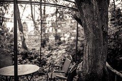 In the garden (laura java) Tags: tree monochrome garden jardin arbre chaise fer