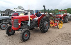 Massey Ferguson 62 Mk 2.  442 XUN with Bamfords Reaper Mower (2) (Glosters) Tags: classic classicvehicles masseyferguson autoextravaganza autoextravaganzawetleyrocksstaffordshire2016 masseyferguson62mk2 bamfordreapermower