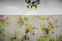 O lençol.. (marcellohenrique3) Tags: flores 50mm pano chuva tempo varal florido lençol