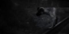 Where is Ophelia? (P. Correia) Tags: 2005 dog spain ophelia sansebastián pcorreia johneverettmillais zorancoach10 littledoglaughednoiret