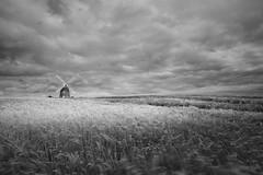 Summertime (PeaStew) Tags: essex eastanglia barley field landscape canon breeze windy windmill mill