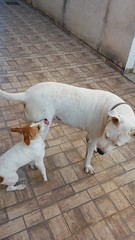 20141102_075214 (CaminhaCão) Tags: dogdaycare catsitter doghotel petsitter hotelparacães crecheparacães hoteldecachorro crechedecachorro babádeanimais