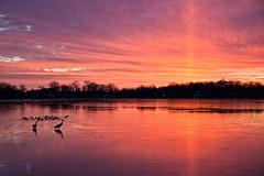 ADMIRATION (ddt_uul) Tags: morning winter sun lake cold ice water clouds sunrise early crane michigan ducks sandhillcrane whitmorelake