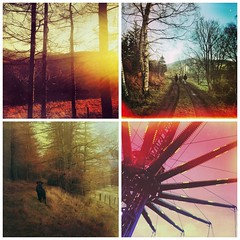 a taster of winter 2014 [IG/iPhone] (Lucy Alice Photography) Tags: christmas dog nature collage woodland festive square scotland countryside united kingdom naturallight format app blacklabrador phoneography iphoneography iphoneonly instagram instagramapp ip
