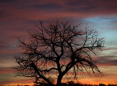 November 9, 2014 - A glorious sunrise in Colorado. (Ed Dalton)