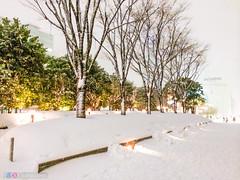 1JP247 (leahddavies) Tags: trees snow green japan japanese tokyo golden shinjuku snowfall whitesnow blizzard wintertrees snowytrees snowontrees heavysnow vibrantcolors lightfestival vibrancy treesinwinter tokyosnow shinjukunightlife snowinjapan shinjukulights tokyoblizzard shinjukulightfestival