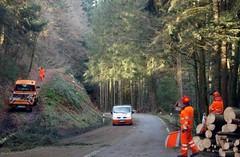 Harde werkers. (limburgs_heksje) Tags: winter deutschland schwarzwald duitsland zwartewoud boswerkers