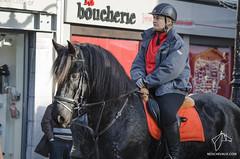 2014.11.23 Sainte Catherine  Huy - Fte du cheval (NosChevaux.com) Tags: horse club cheval huy saintecatherine chevaux poney pegase poneyclubpegase