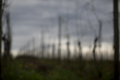 vines (mexou) Tags: blur 50mm12 wormeldange koeppchen 5diii