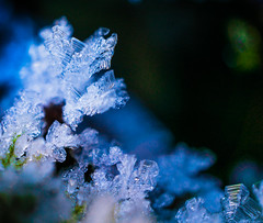 Frost (Don White (Burnaby) Thanks for the Three Million V) Tags: macro ice frost bokeh hoarfrost centralpark sel30m35