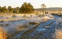 Early Morning Walk (WHO 2003) Tags: couple frosty walkers thursleycommon