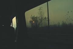 (chiara91schi) Tags: road street sunlight bus tree window sunshine afternoon roadtrip ontheroad viaggio sera