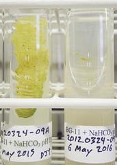 ORNG0379 (David J. Thomas) Tags: culture cave algae microbiology slant agar cyanobacteria phycology lyoncollege bg11 photobiont phycobiont