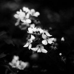 In Canyons 094 (noahbw) Tags: flowers light shadow blackandwhite bw abstract blur monochrome forest square landscape blackwhite spring woods nikon dof natural depthoffield dreamy dreamlike starvedrockstatepark d5000 noahbw