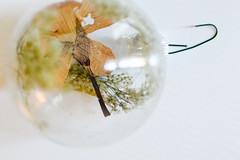 DIY Dried Flower Orbs (Acquiring the Taste) Tags: flowers diy display dried tutorial