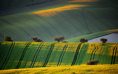 Italian Landscape (emanuelezallocco) Tags: travel light sunset shadow italy sun green nature colors yellow landscape wave hills campagna fields travle marche paesaggio italiano rurale