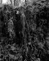 Tree pulled up by the roots and covered in mud (Hyons Wood) (Jonathan Carr) Tags: bw white abstract black tree monochrome grass rural landscape mud roots 4x5 abstraction northeast exposed largeformat 5x4 pulledfromtheground